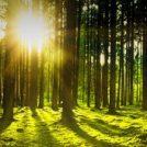 A sunlit woodland scene